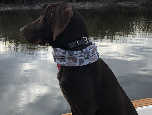 charter fishing charleston dog